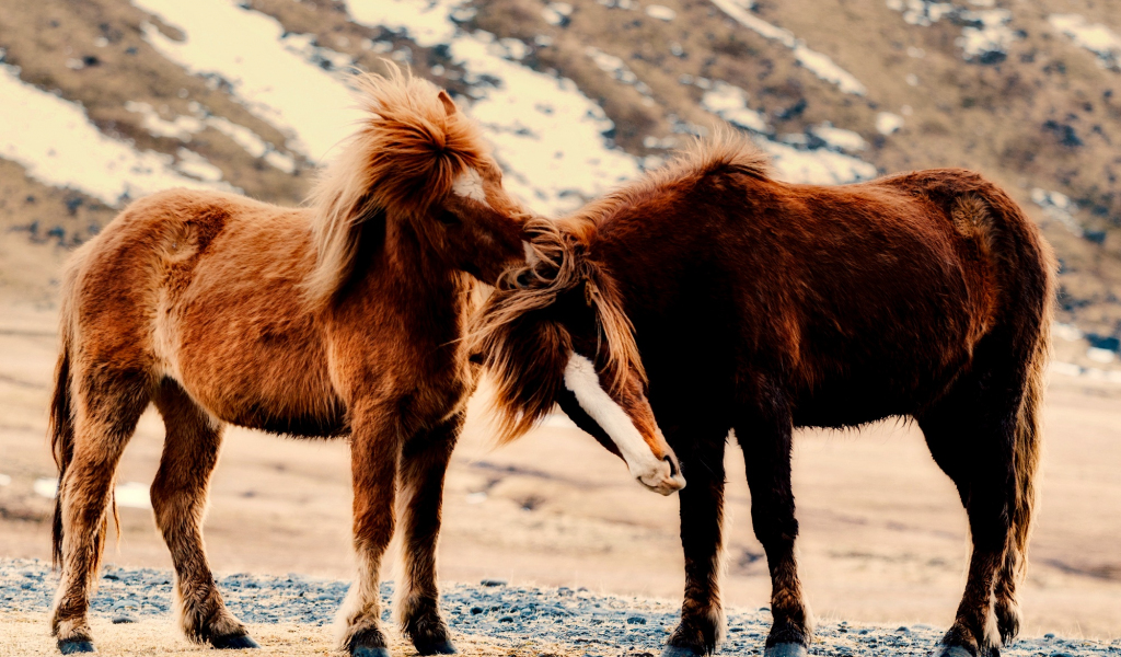 1024x600 wallpaper Horse, pony, play, animals