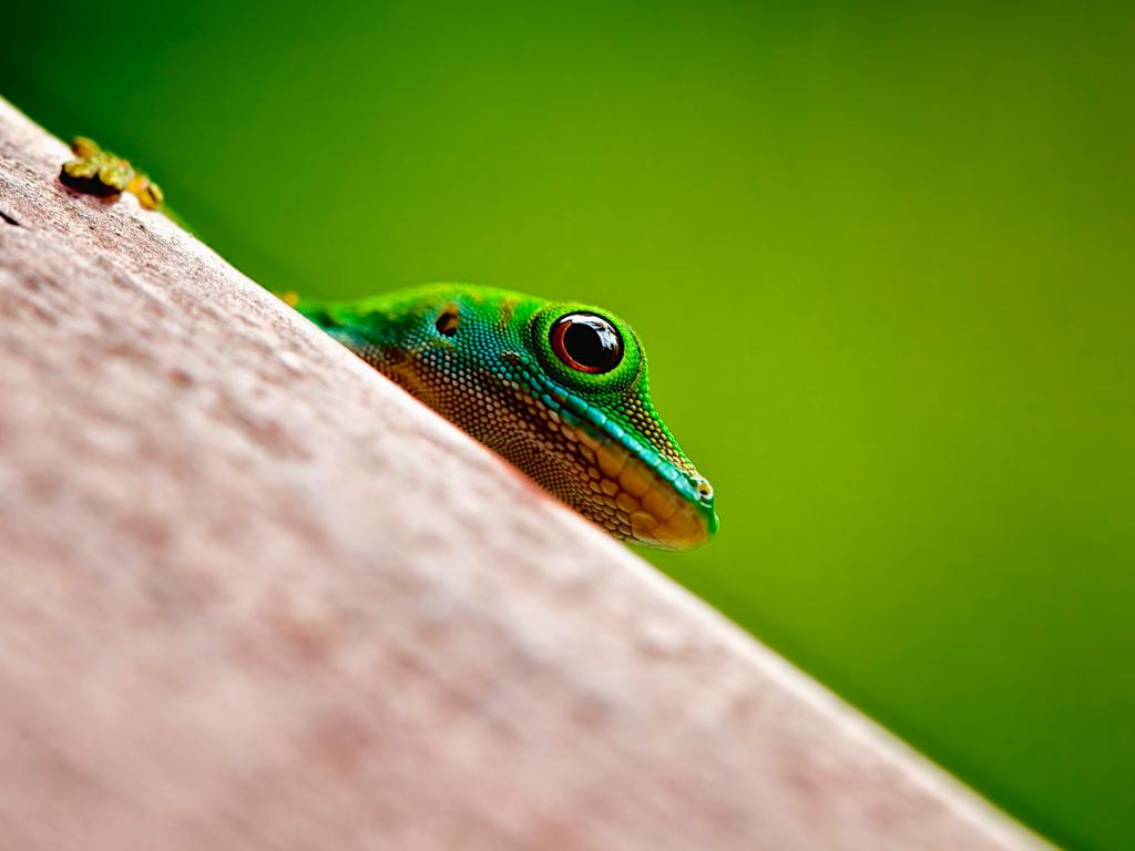 Desktop Wallpaper Frog, Amphibian, Muzzle, Gionee, Android