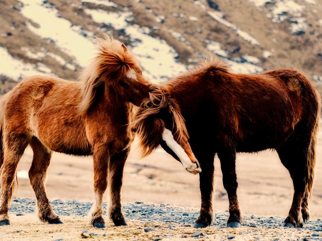 1024x768 wallpaper Horse, pony, play, animals