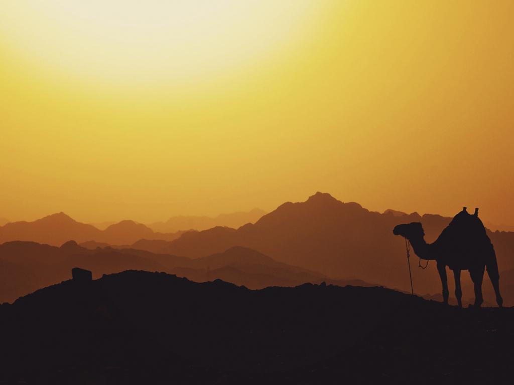 1024x768 wallpaper Camel, animal, mountains, sunset, horizon