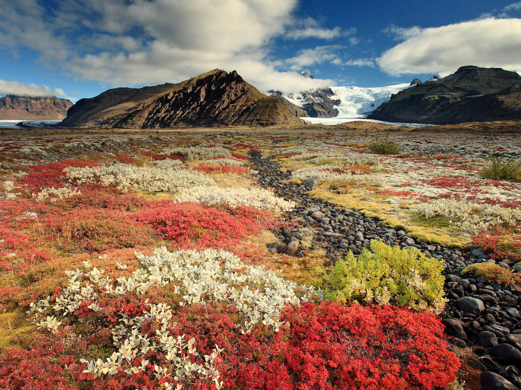 Download 1024x768 Wallpaper Wild Flowers Beautiful Scenery