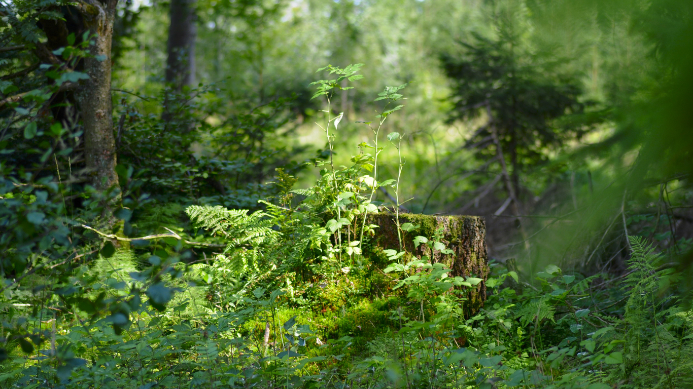 Download 1366x768 Wallpaper Nature Forest Plants Tablet