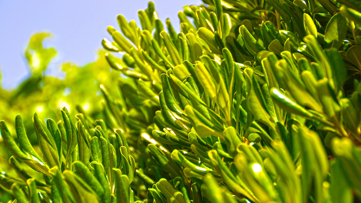 Olive Green Background Hd