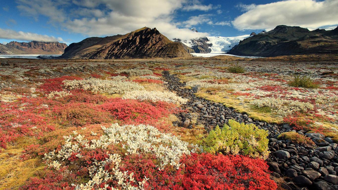 Download 1366x768 Wallpaper Wild Flowers Beautiful Scenery Tablet