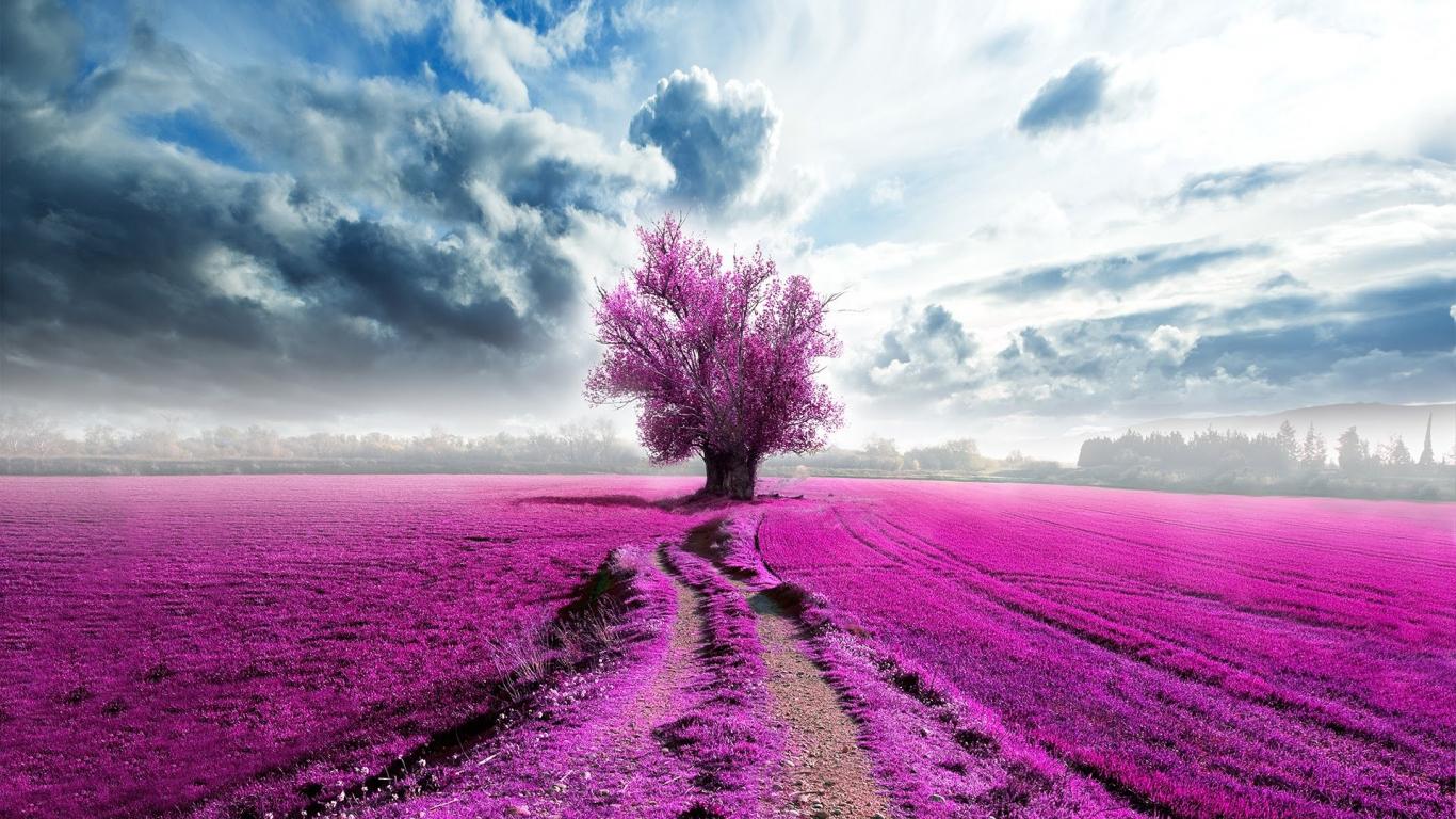 Download 1366x768 Wallpaper Tree Pink Clouds Horizon