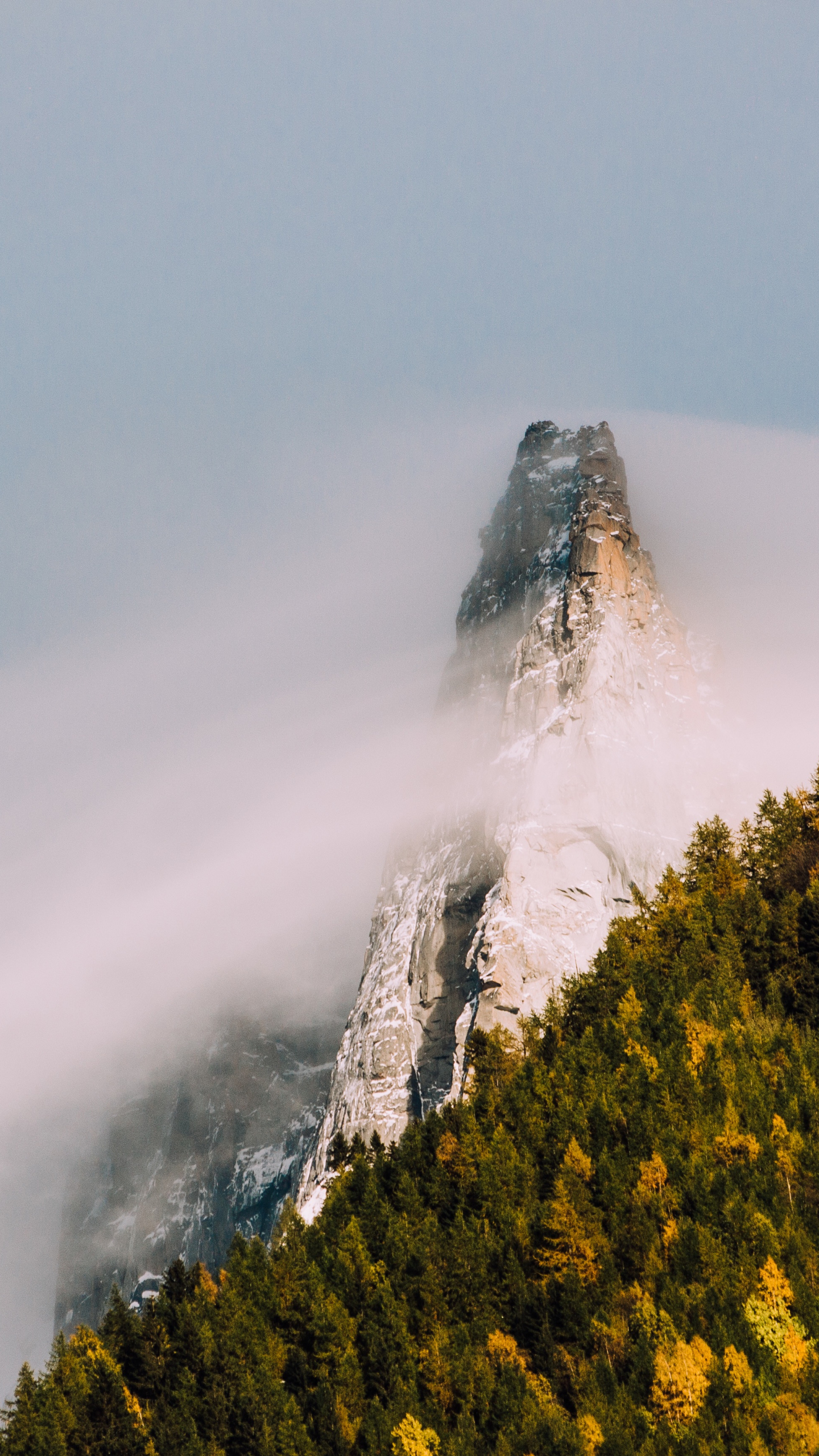 1440x2560 wallpaper Mountain cliff, fog, tree, forest, nature