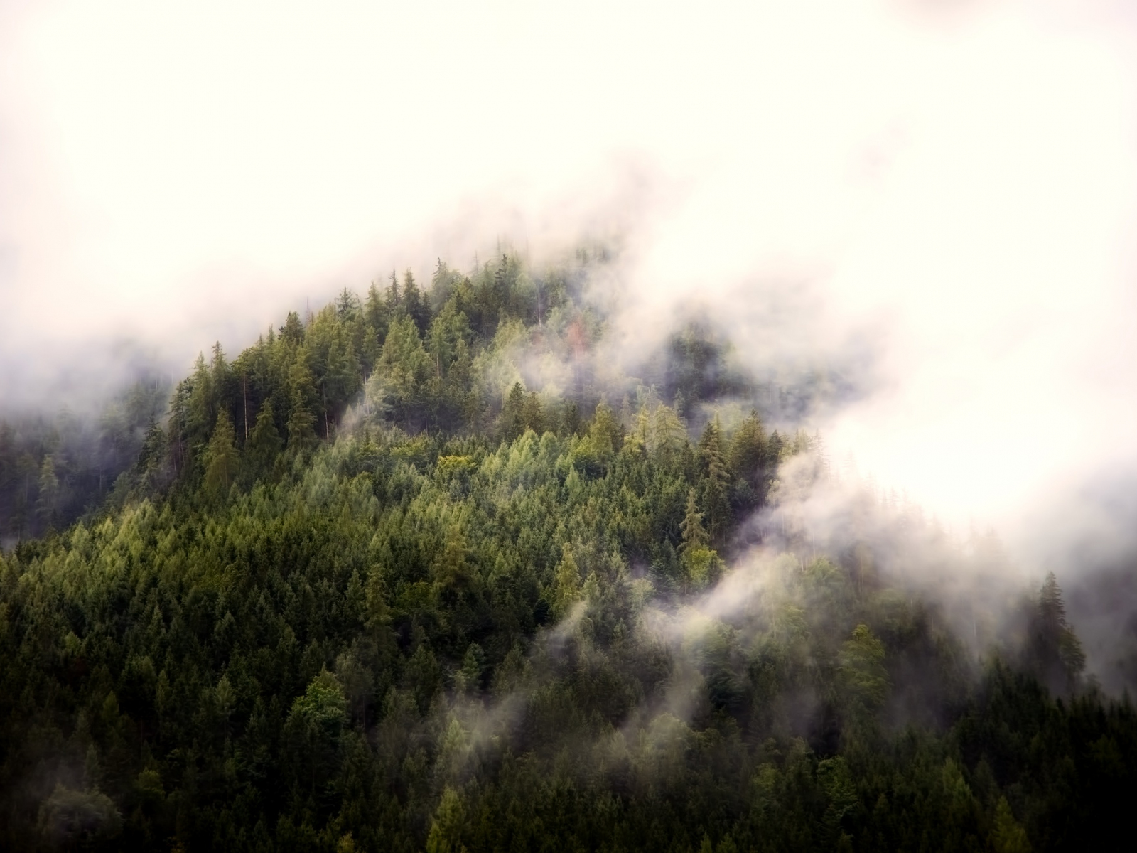 1600x1200 wallpaper Fog, aerial view, forest, nature, trees
