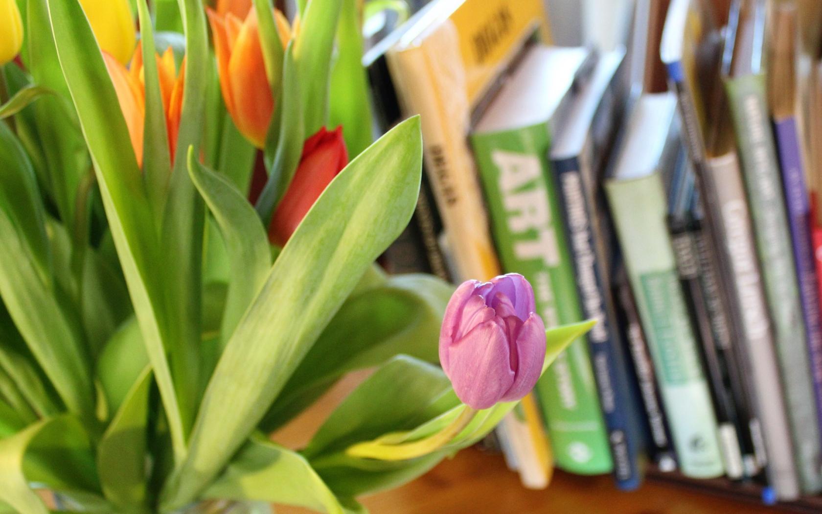 Download 1680x1050 Wallpaper Pink Tulip Bud Books Widescreen 16 10