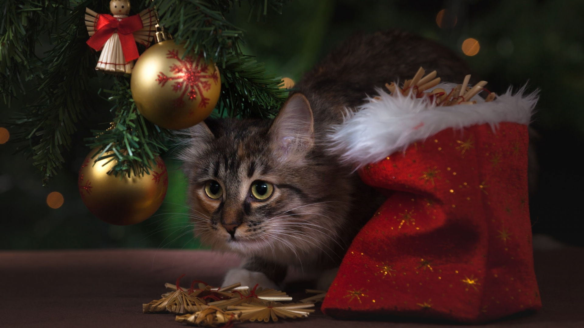 Download 1920x1080 Wallpaper Kitty Cat And Christmas