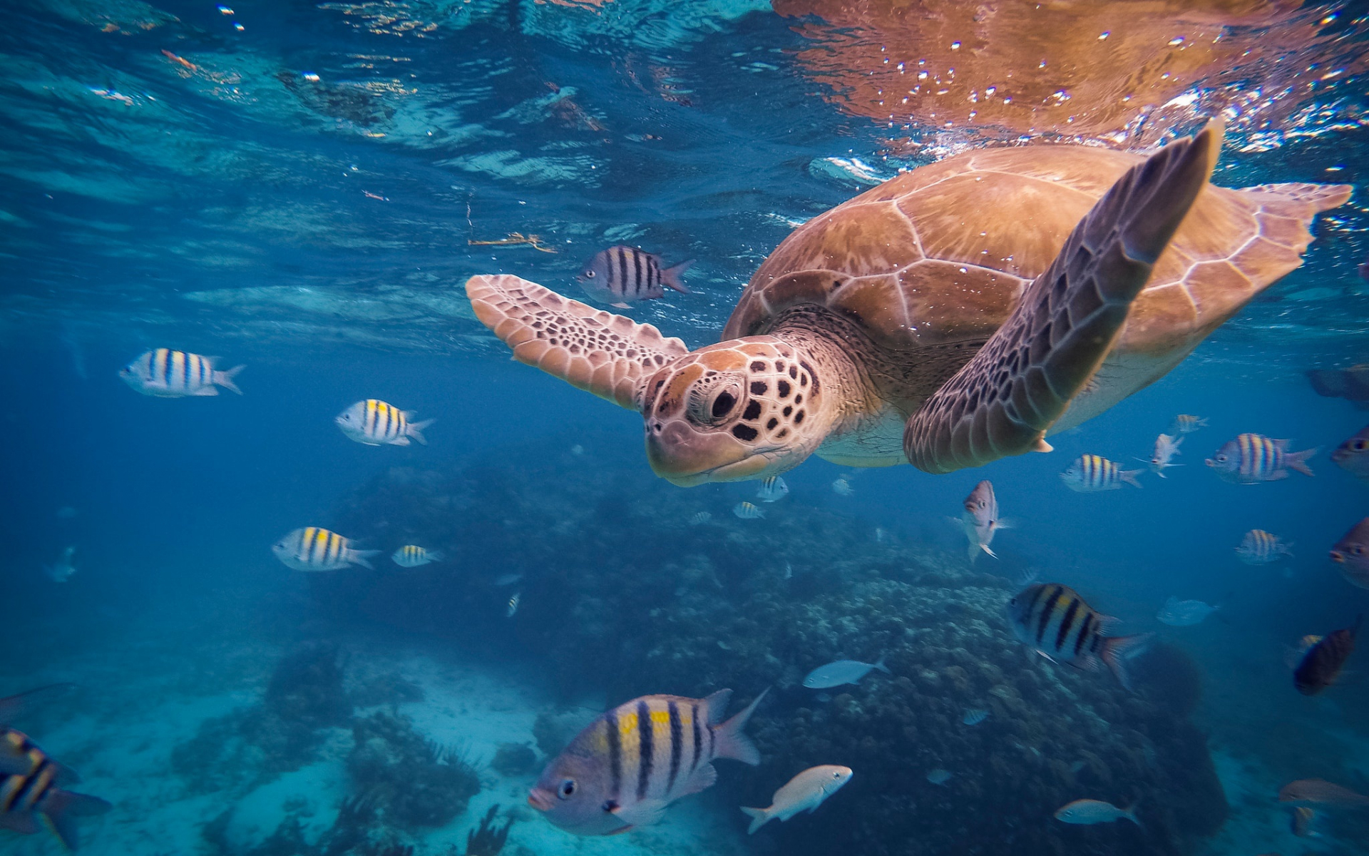 Desktop Wallpaper Turtle Tropical Fishes Underwater Hd Image Picture Background 3b63f5