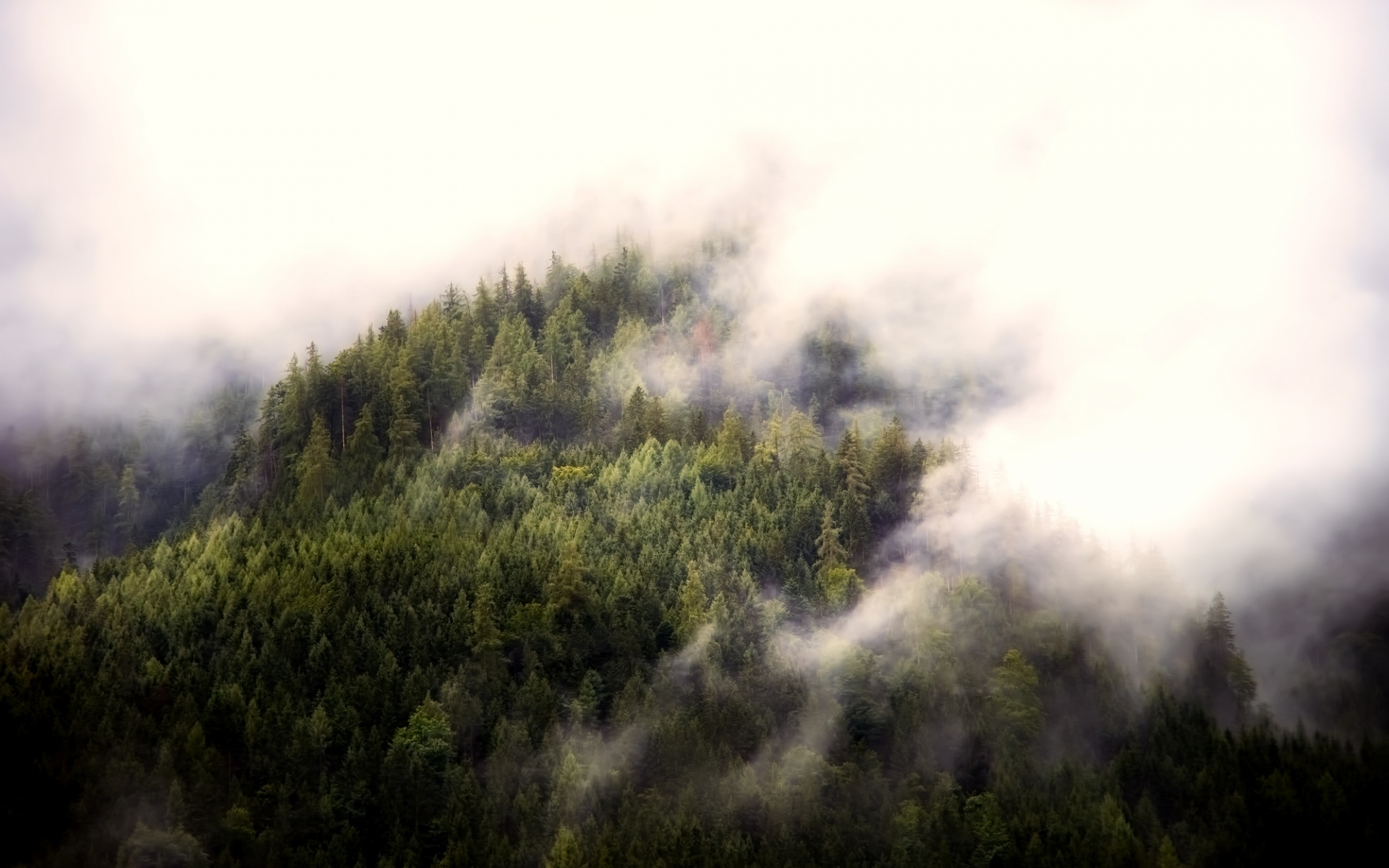1920x1200 wallpaper Fog, aerial view, forest, nature, trees