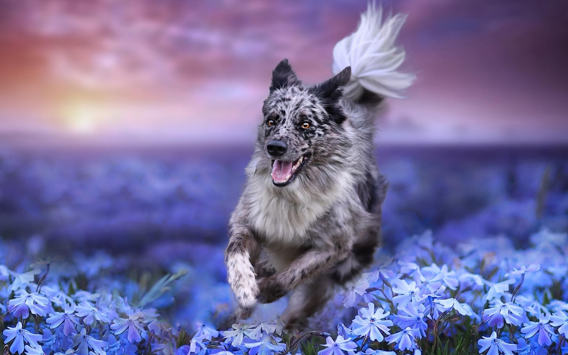 собака поле цветы бесплатно