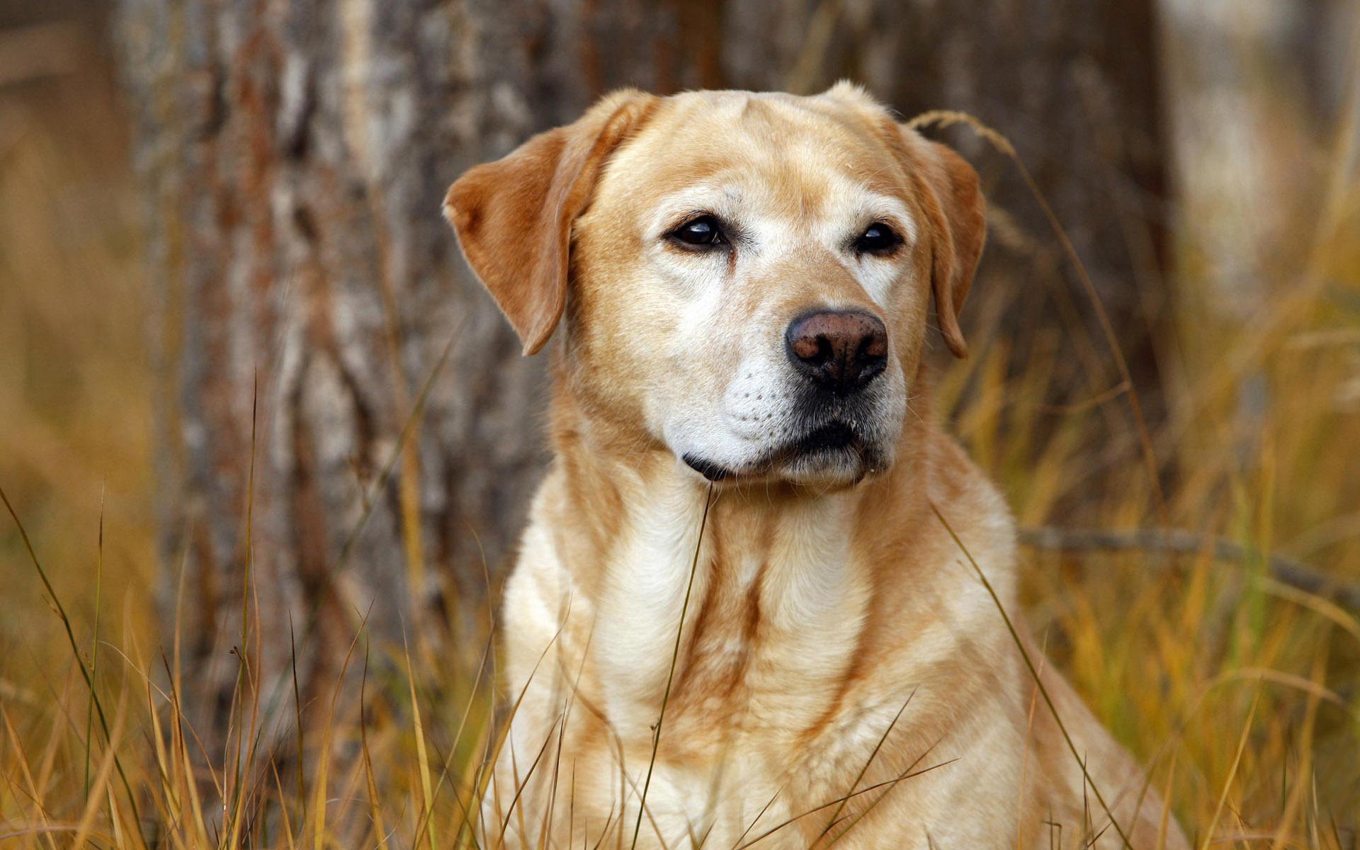 животные собака трава природа без смс