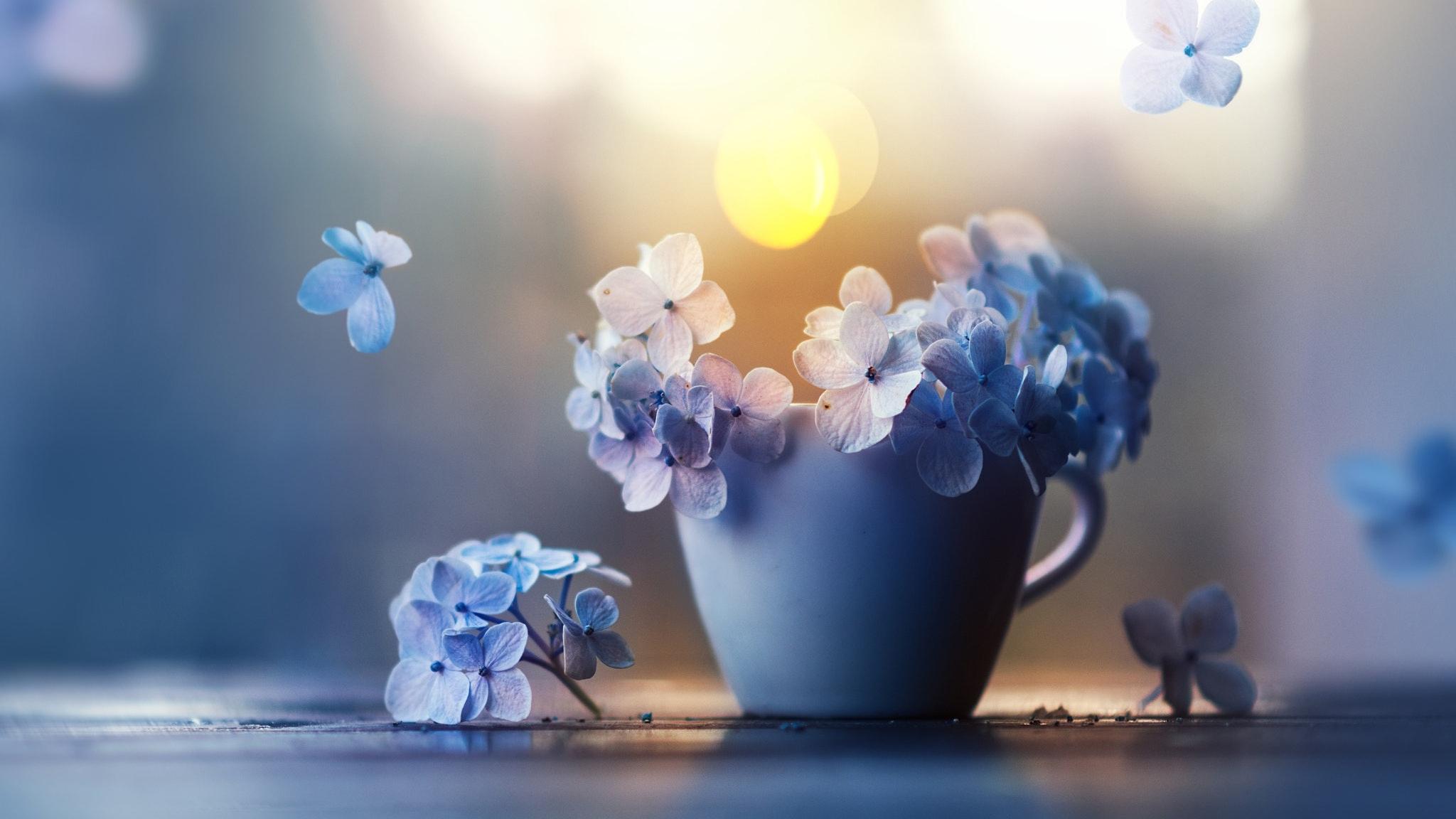 Download 2048x1152 wallpaper small blue flowers pot dual wide 2048x1152 wallpaper small blue flowers pot izmirmasajfo