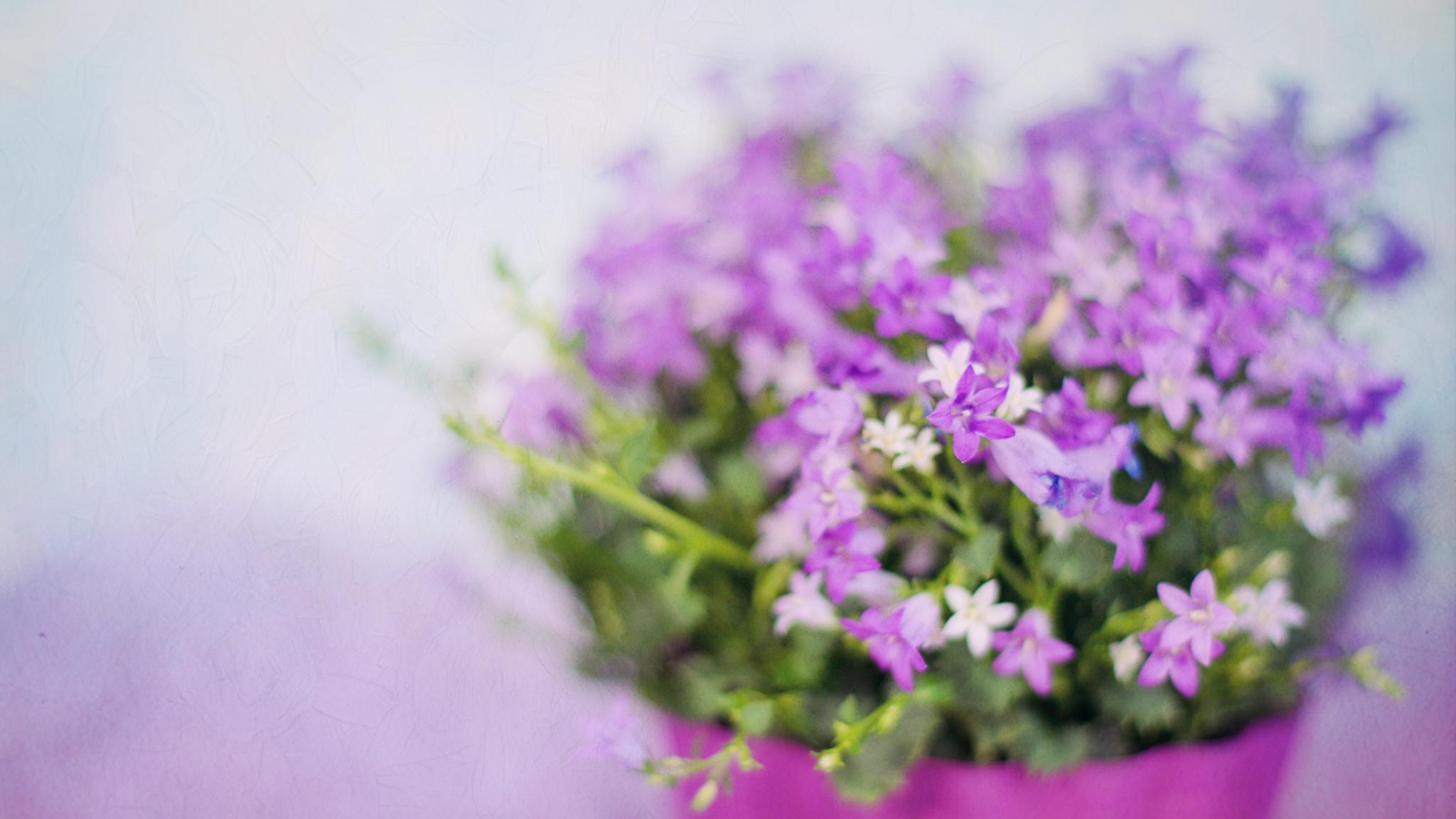 Download 2048x1152 Wallpaper Small Purple Flowers Blur Vase Dual
