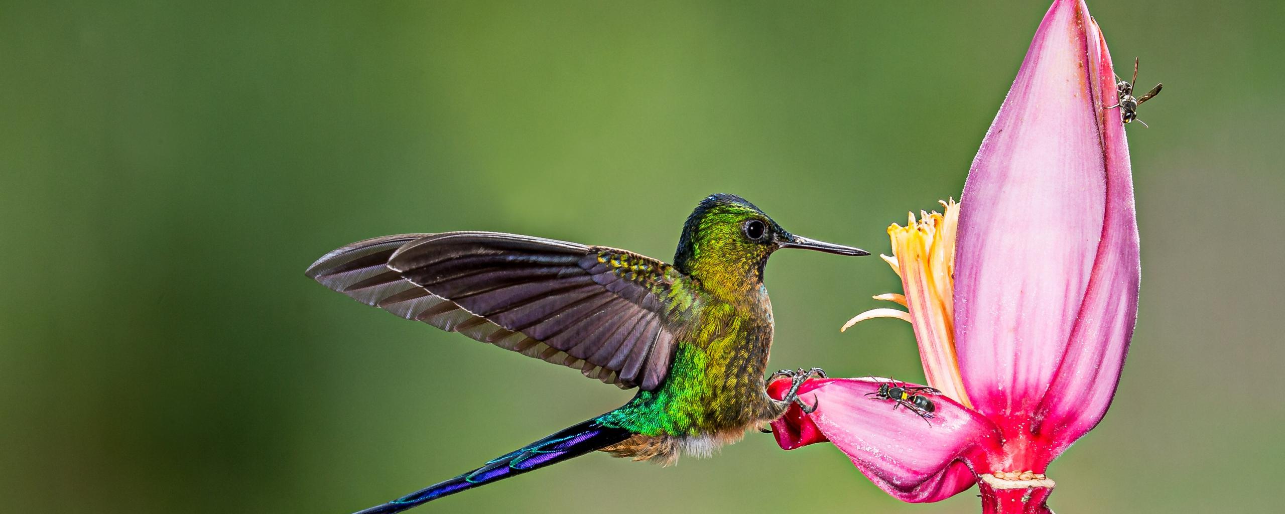 Desktop Wallpaper Hummingbird Long Tail Bird Flower Hd Image Picture Background D73cce