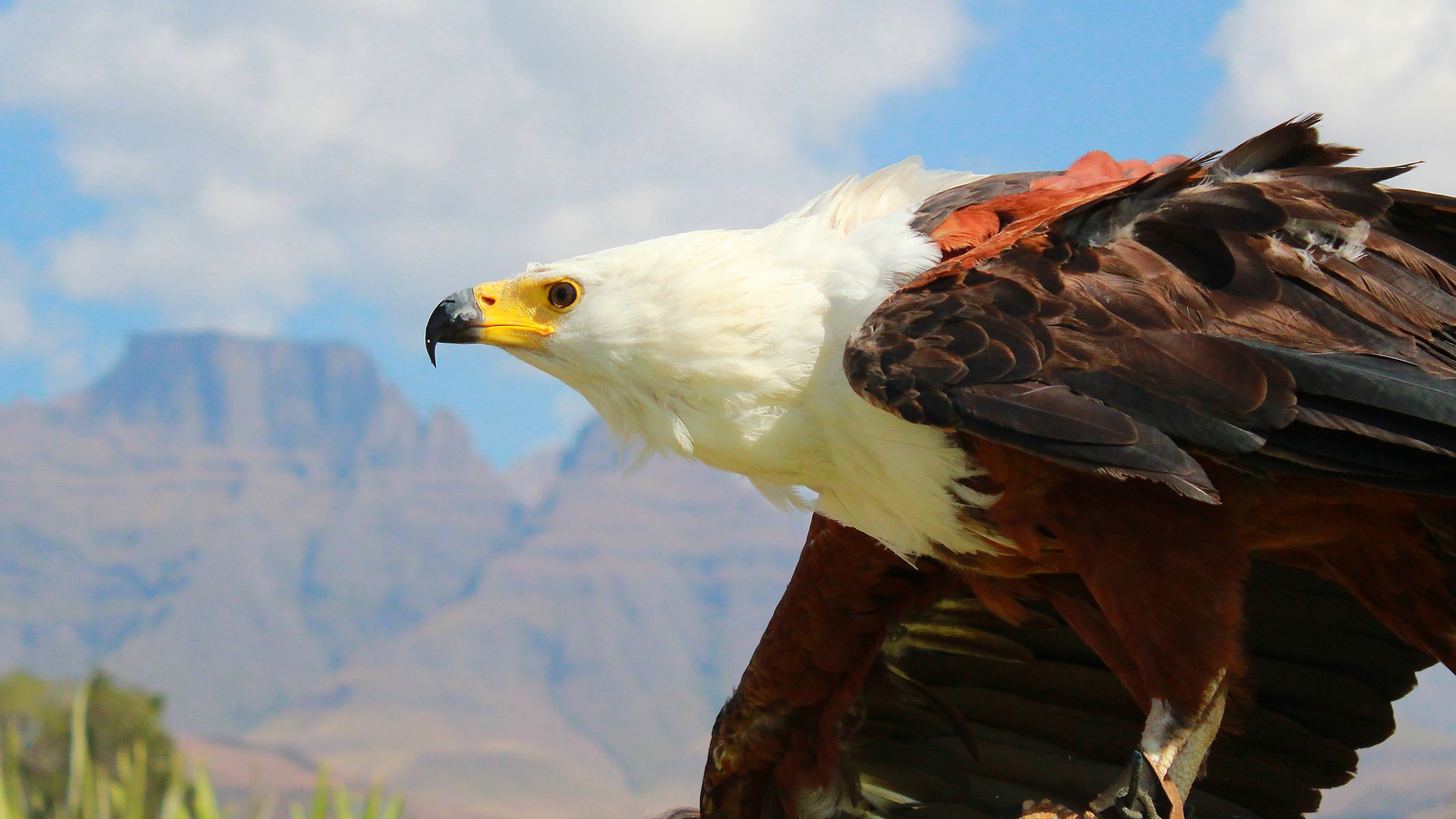 Download 2560x1440 Wallpaper Eagle, Bird, Feathers, Predator, Dual