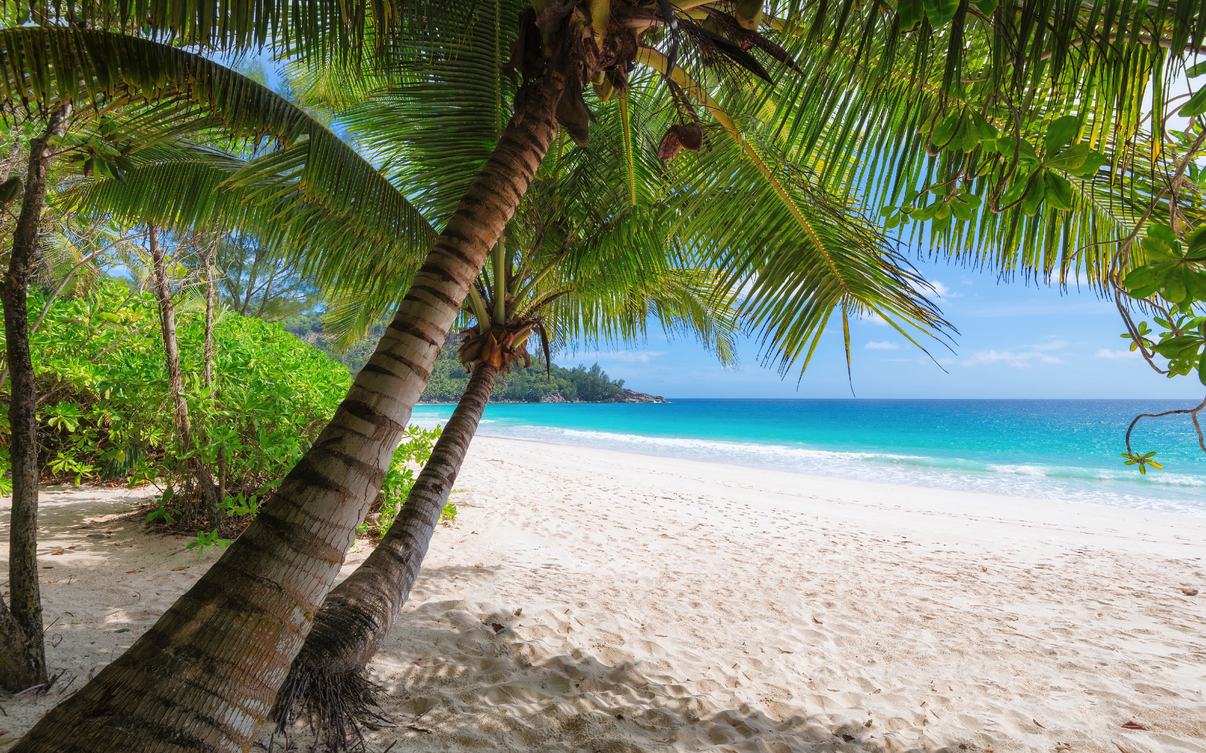 Download 3840x2400 Wallpaper Palm Trees, Tropical Beach ...