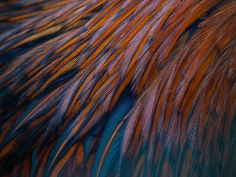 800x600 wallpaper Feathers, texture