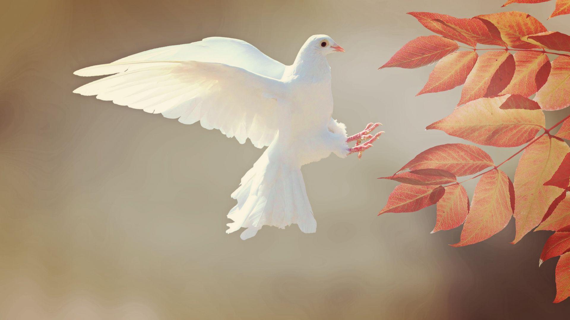 Wallpaper White, dove, flying, leaves, wings