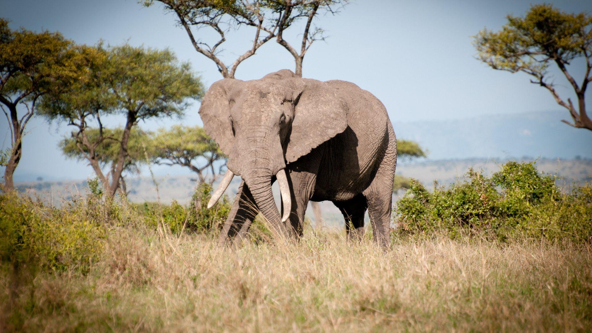 Wild Animal 4k Hd Desktop Wallpaper For 4k Ultra Hd Tv: Desktop Wallpaper Wild Animal, Elephant, Landscape, 4k, Hd