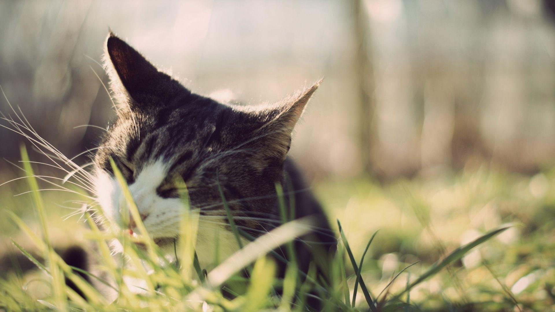 Wallpaper Cat muzzle, grass, close up