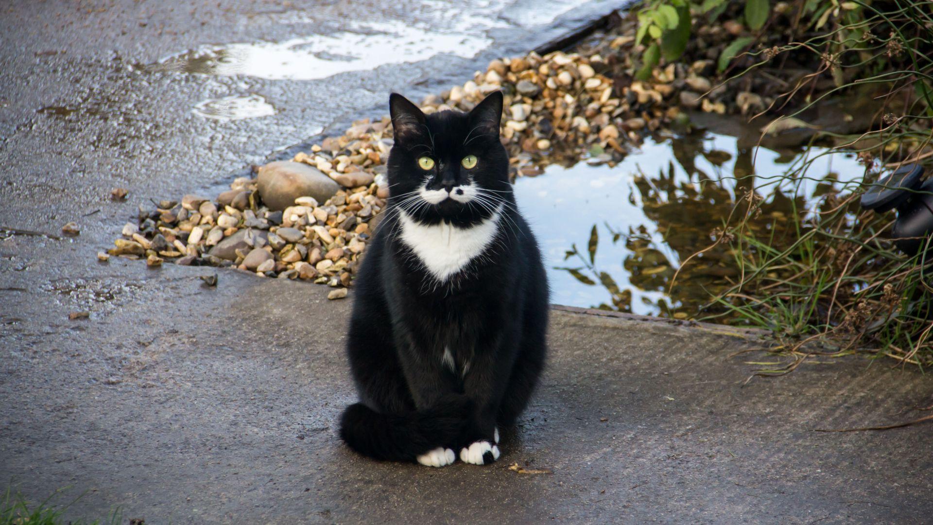 Wallpaper Black cat, pet, sit, calm