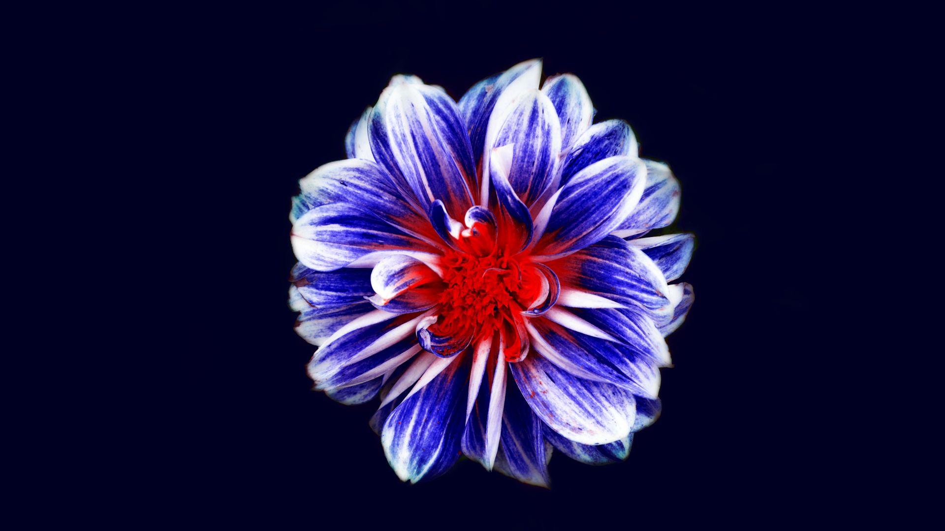Wallpaper Blue flower, digital art, 4k