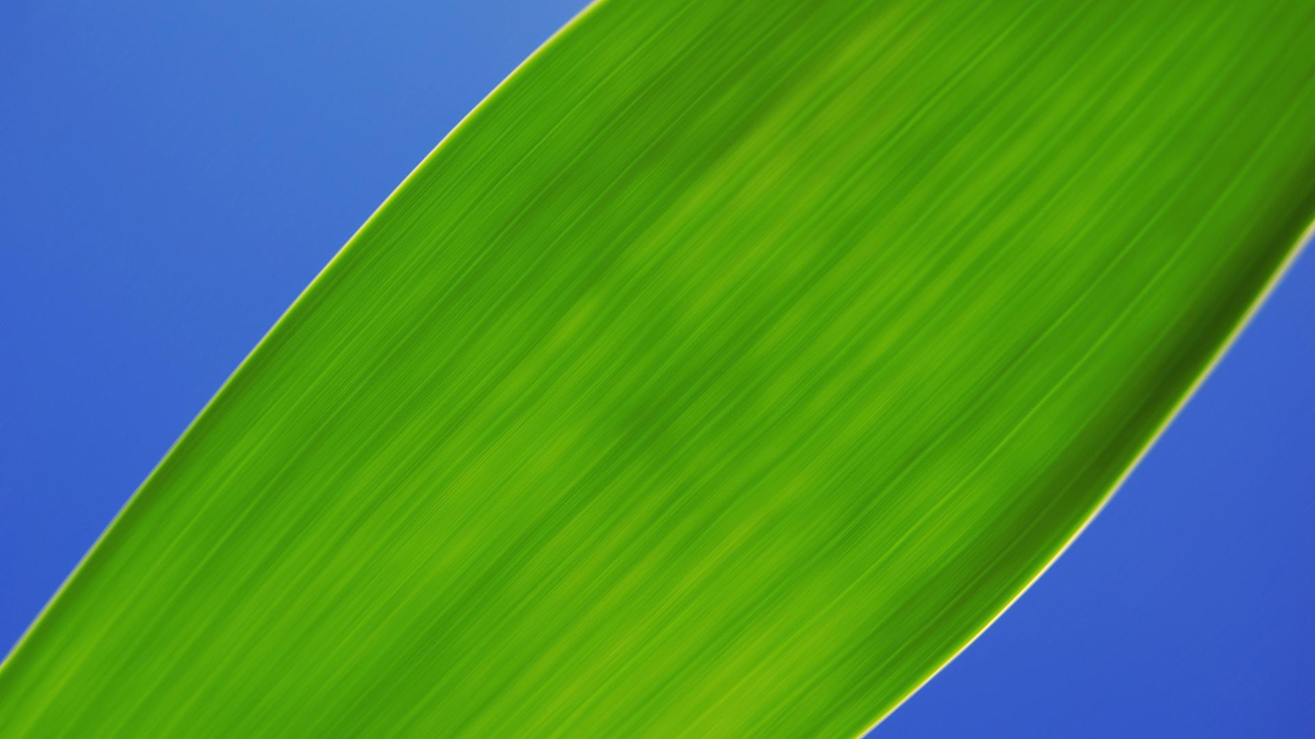 Wallpaper Green leaf, close up