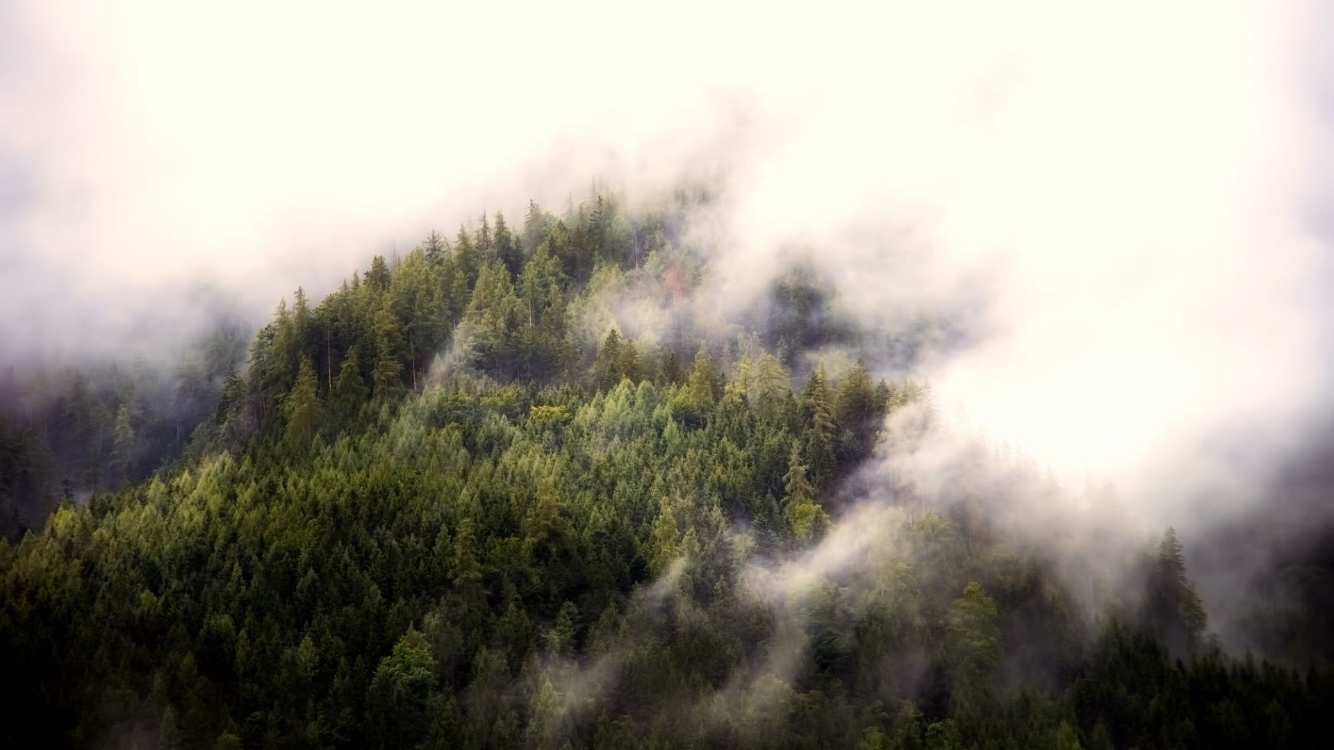 Wallpaper Fog, aerial view, forest, nature, trees