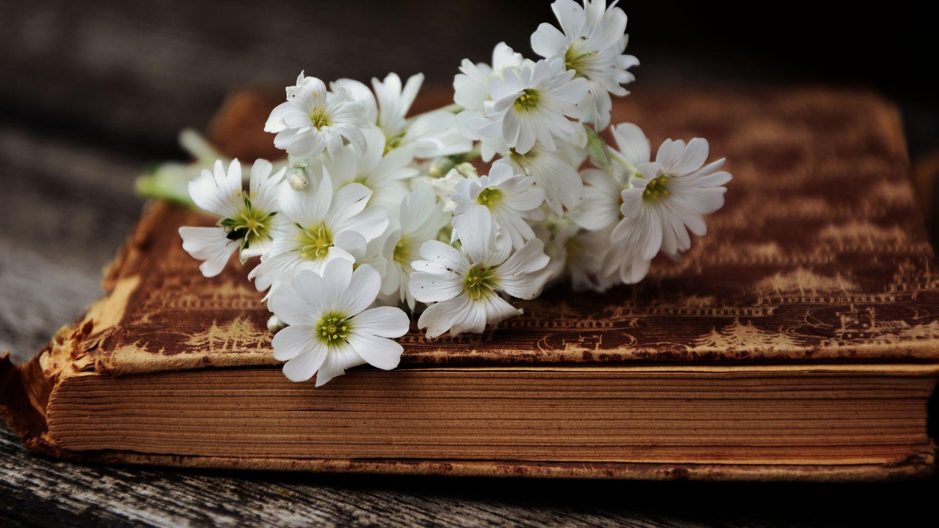 Wallpaper Book, white, wild flowers
