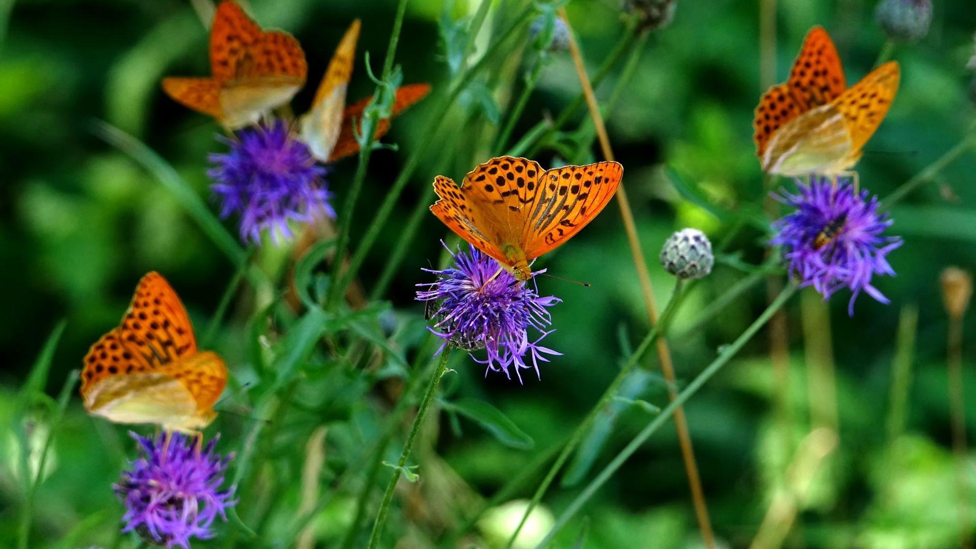 Desktop Wallpaper Orange Butterfly Flowers Meadow 4k Hd Image Picture Background 6d85f5