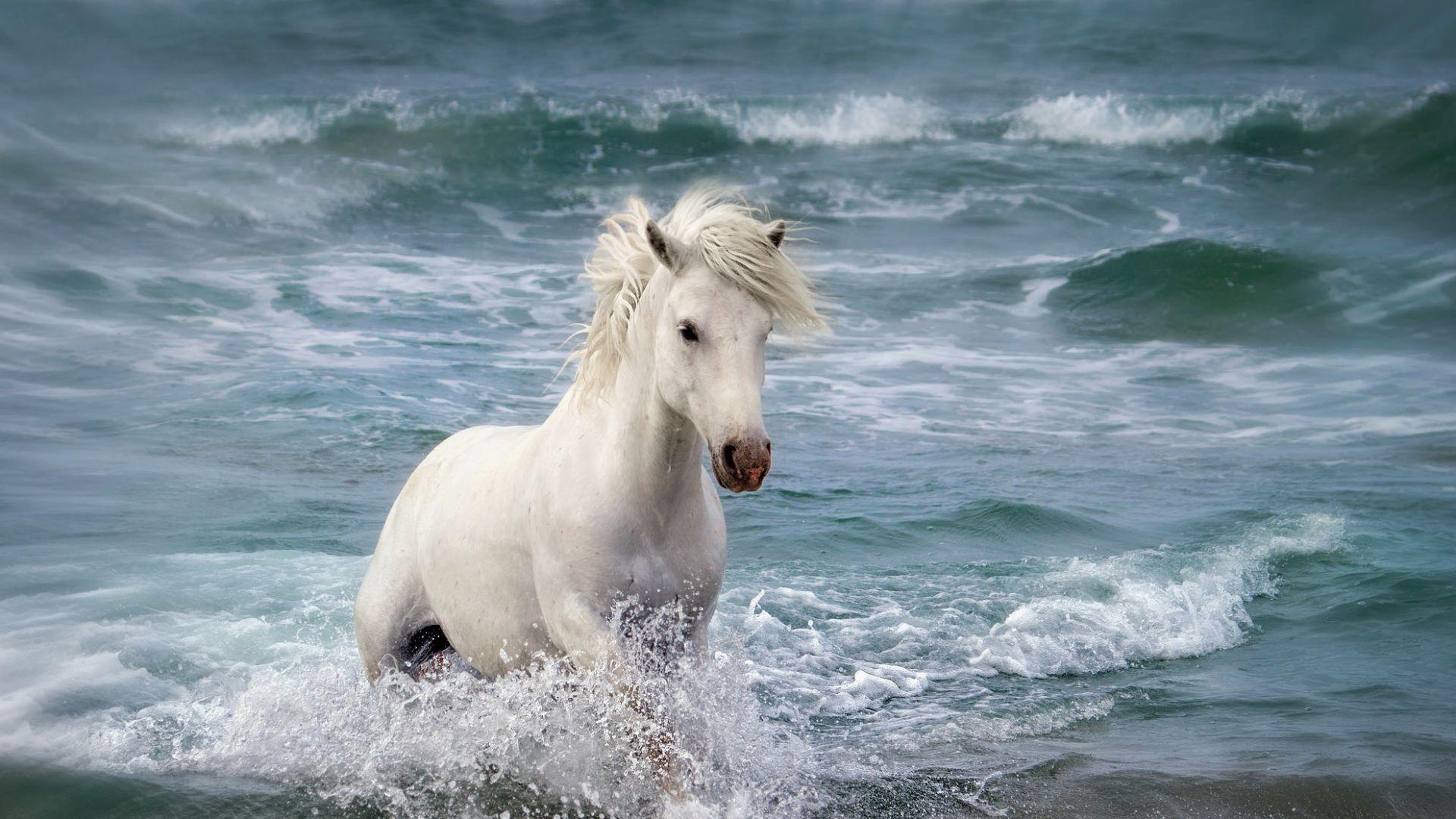 Wallpaper White horse running at beach