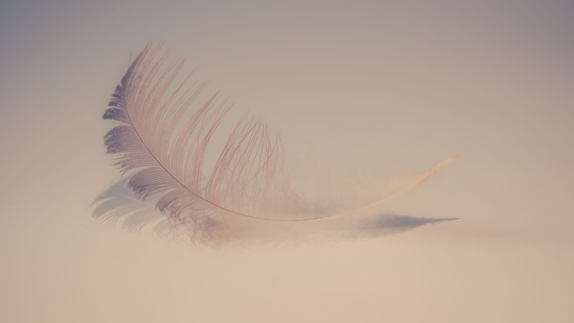 Wallpaper Feather, soft, 5k, minimal