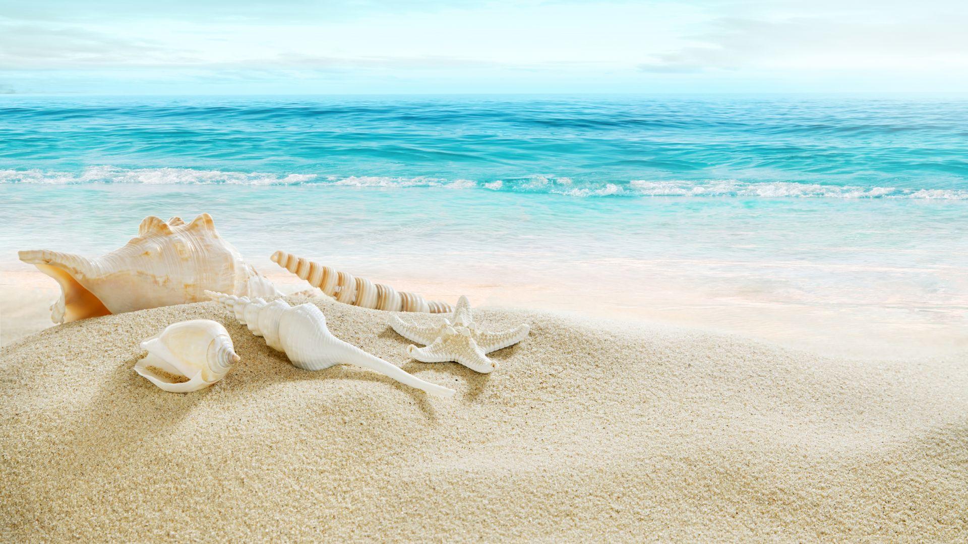 Wallpaper Horizon, beach, shell, sand, summer
