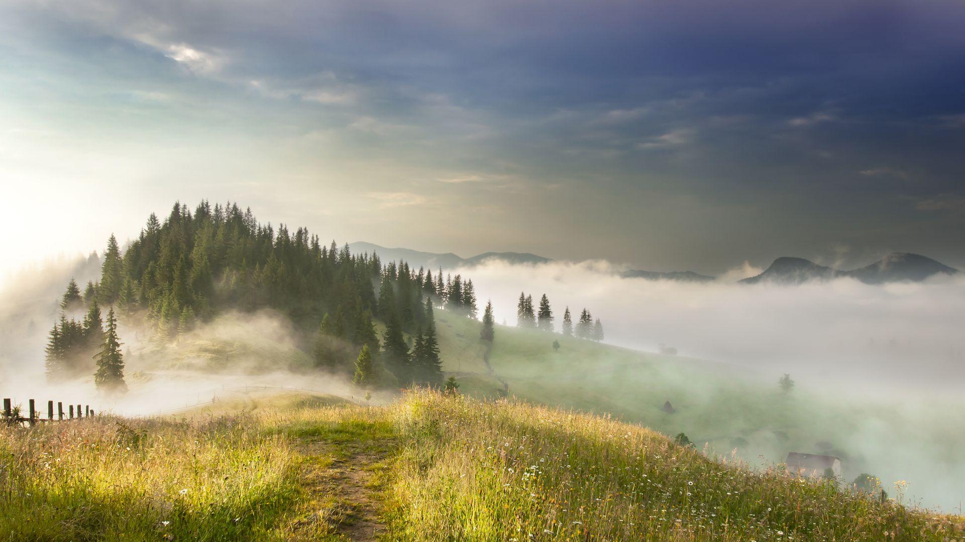 Wallpaper Mist, fog, landscape, tree, valley, sky, aerial view