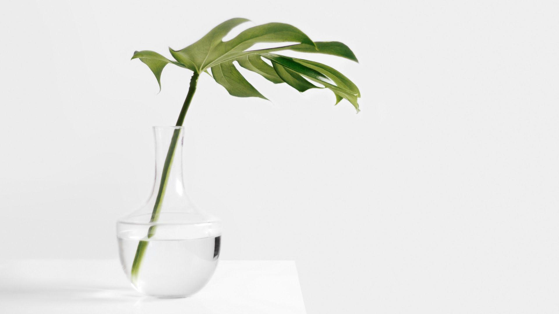 Wallpaper Minimalism green leaf in glass jar