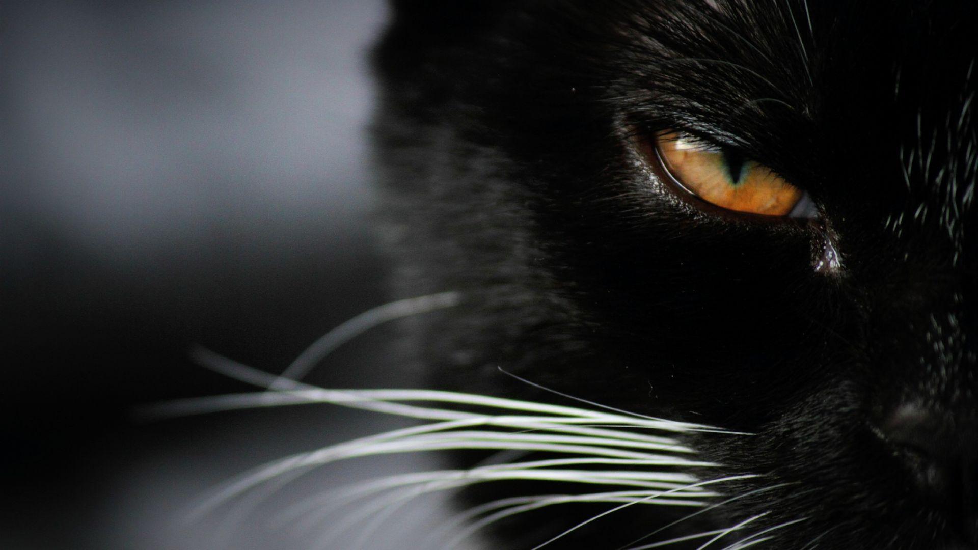 Wallpaper Angry Black cat eye, close up