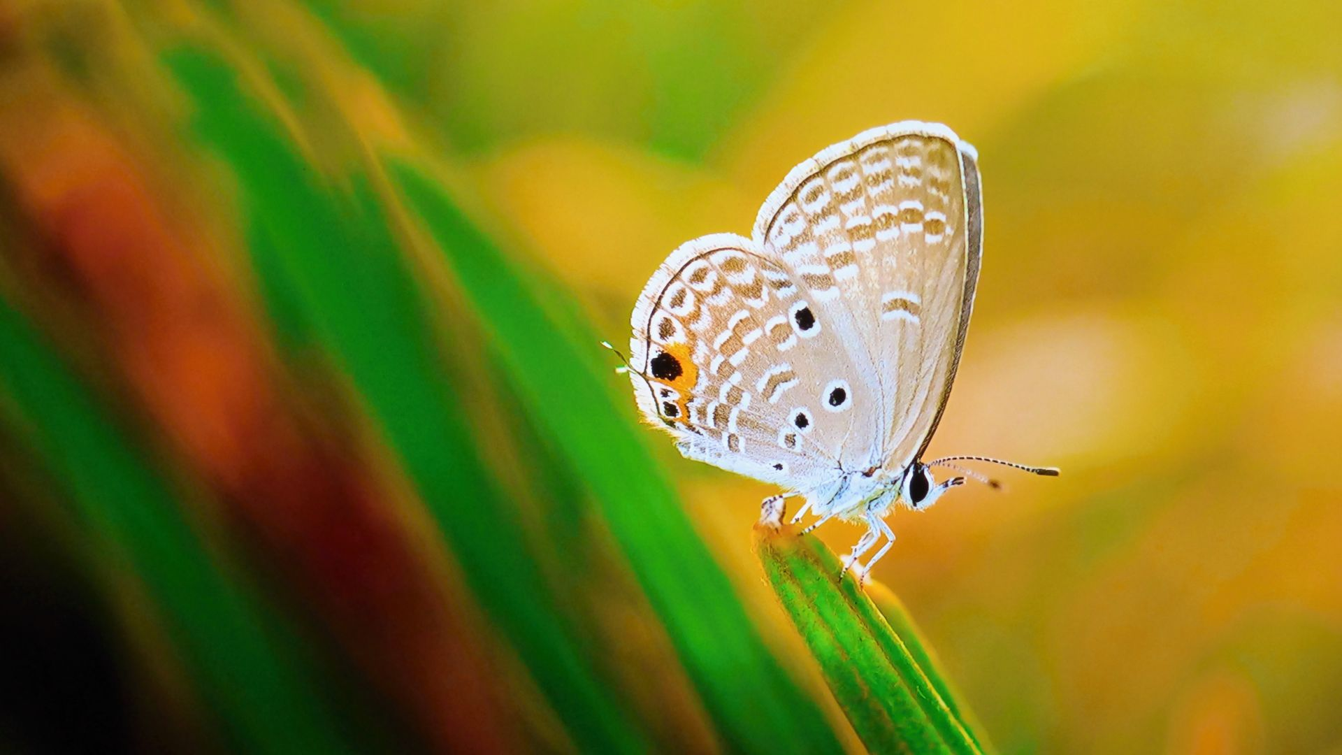 Desktop Wallpaper Close Up Insect Butterfly Wings 4k Hd Image Picture Background A2a299