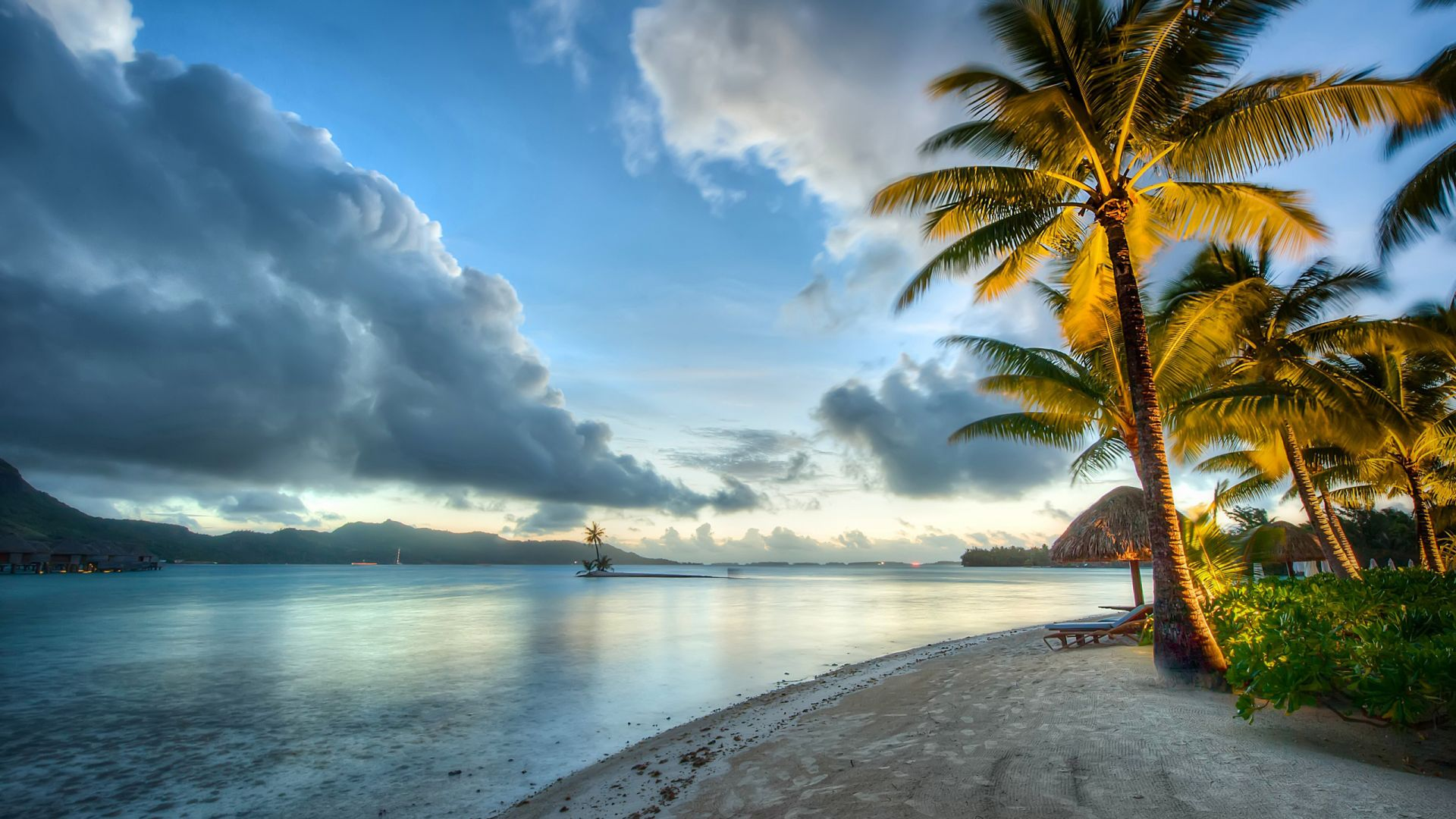 Wallpaper Coast, ocean, sea, scenery, palm tree