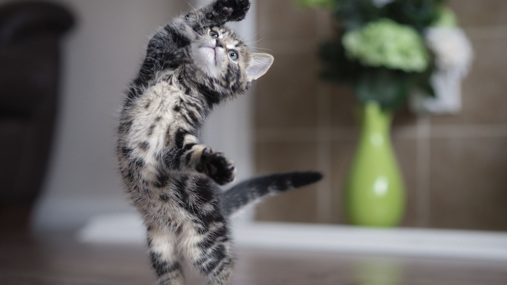 Wallpaper Kitten, cat, playing