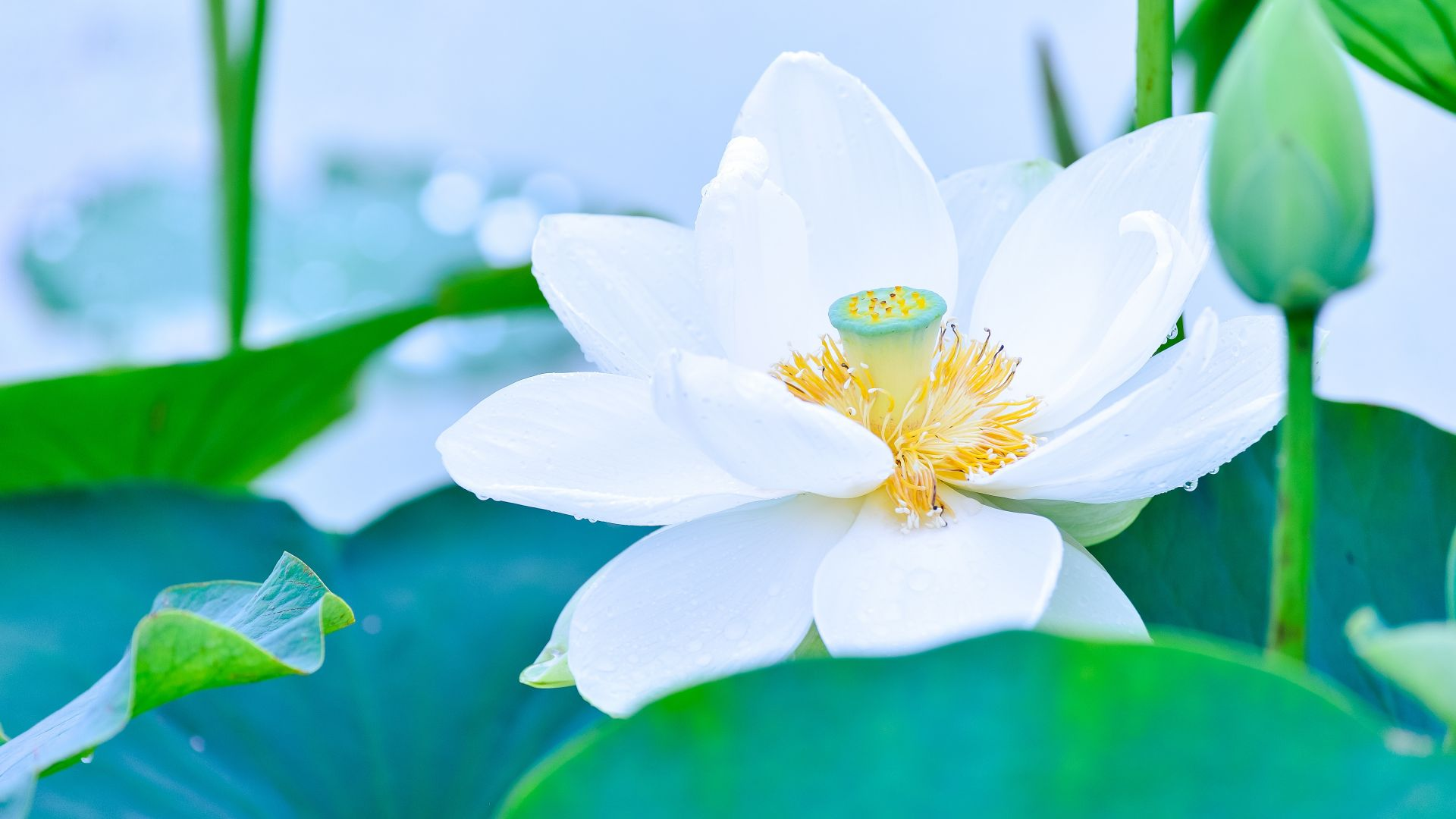 10 Rare Flowers From Around the World Which Are Absolutely Beautiful