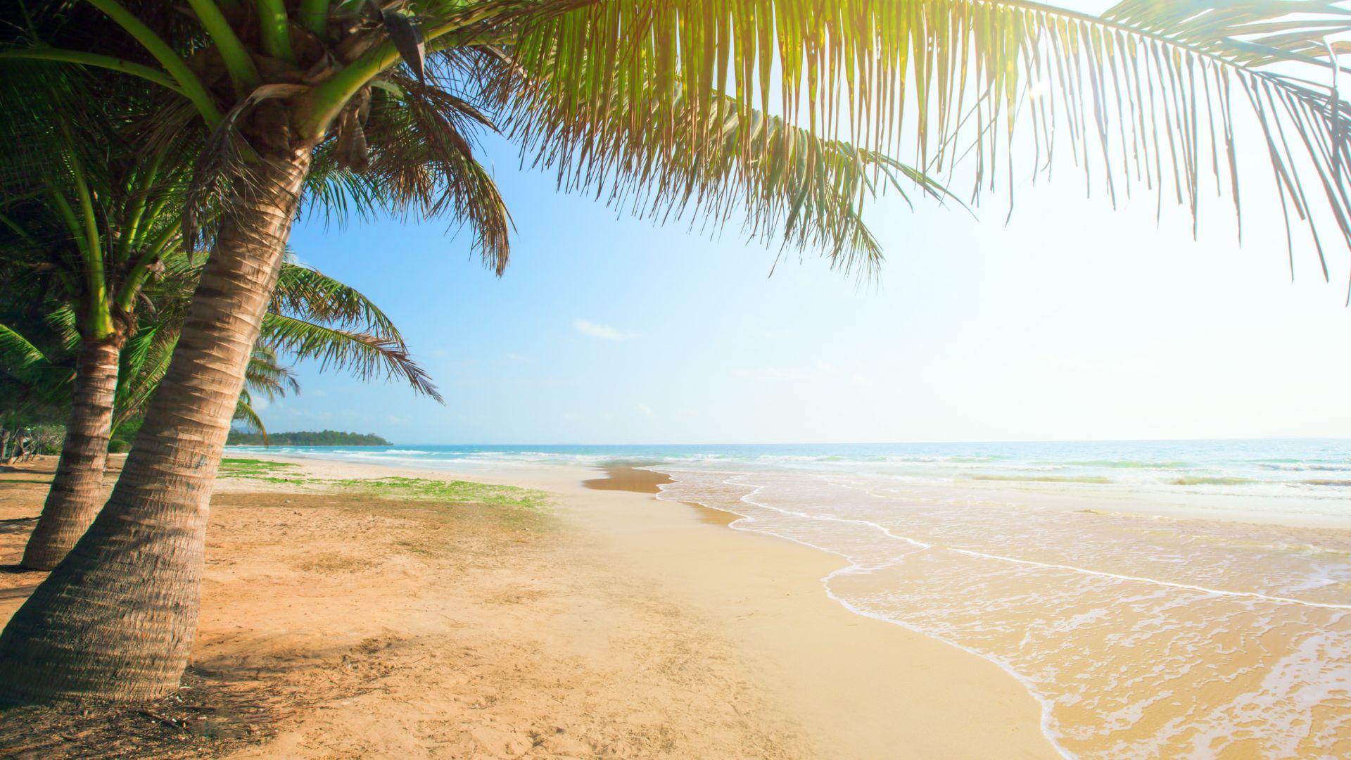 Wallpaper Tropical beach, sea, summer, holiday, palm tree