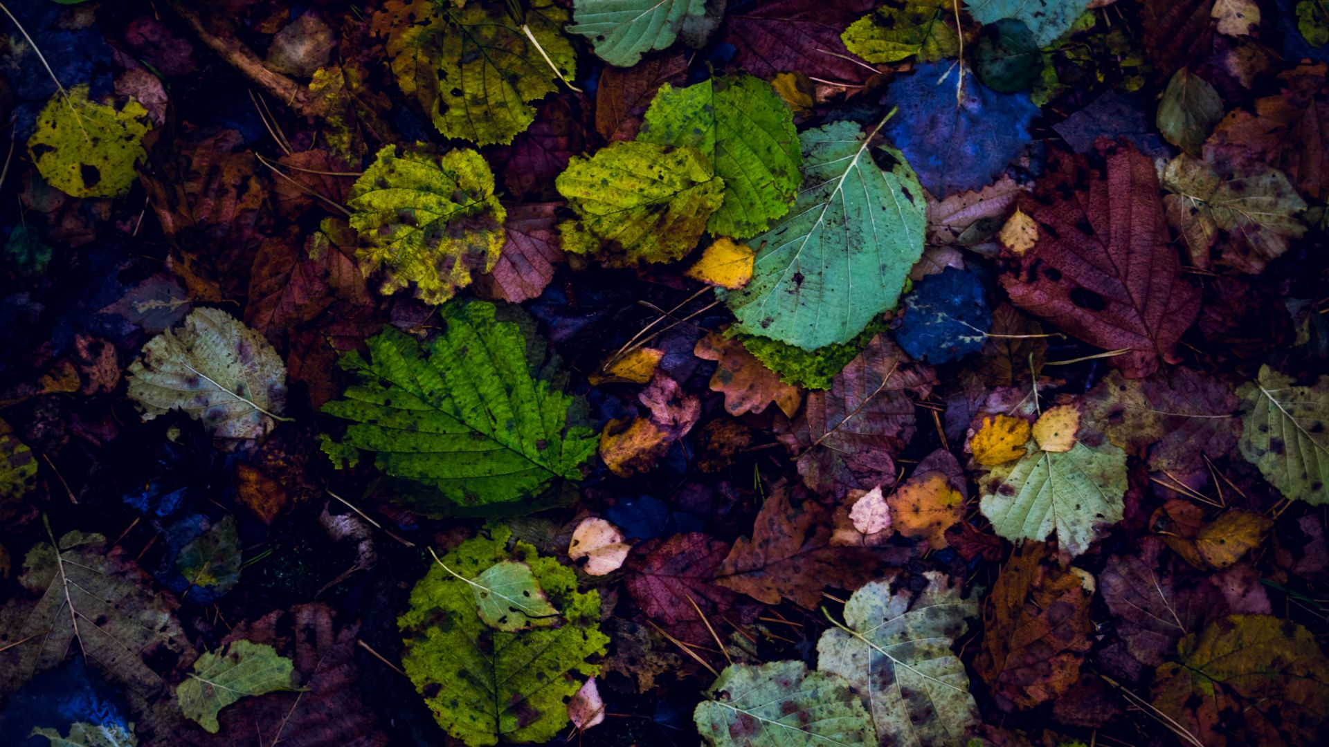 Wallpaper Leaves, autumn, fall, 4k