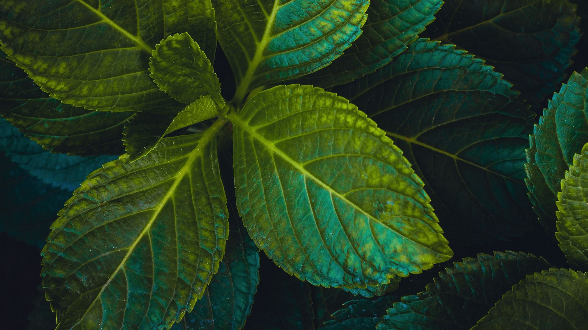 Desktop Wallpaper Green Leaves Close Up 4k Hd Image