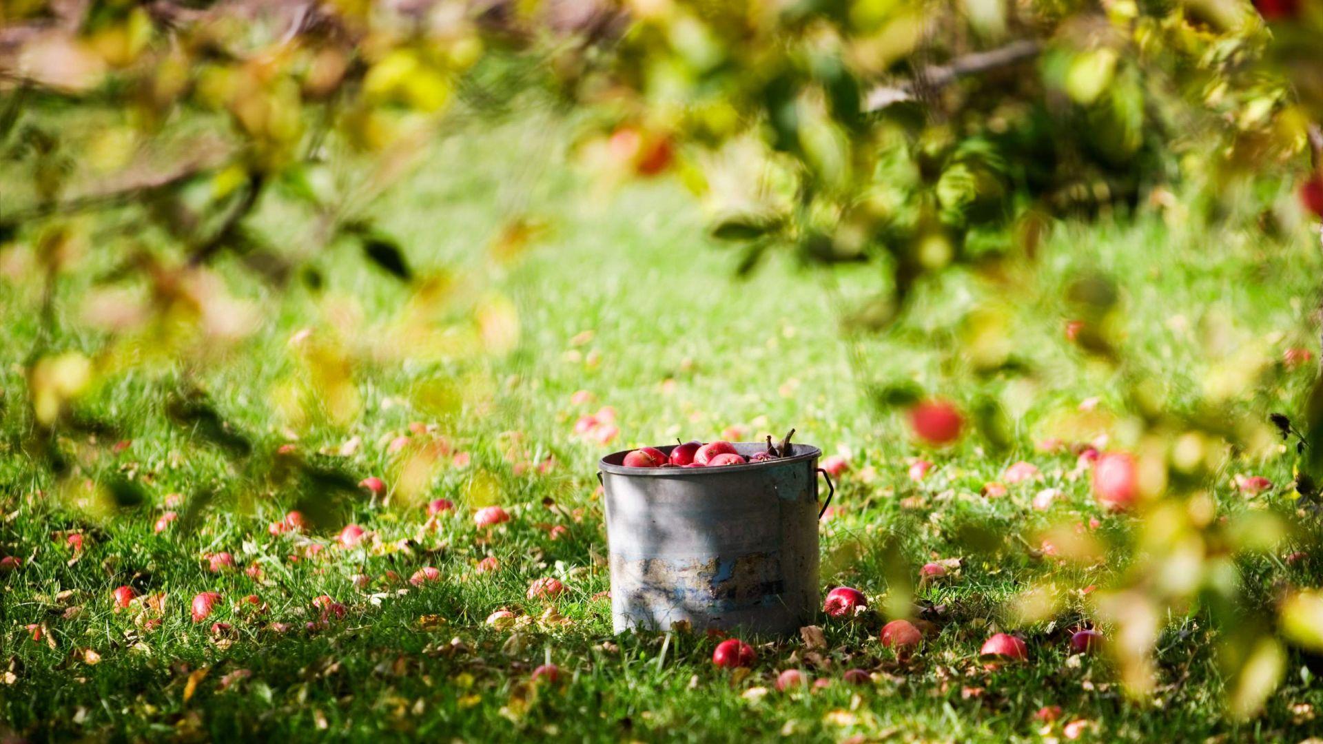 Wallpaper Apple garden