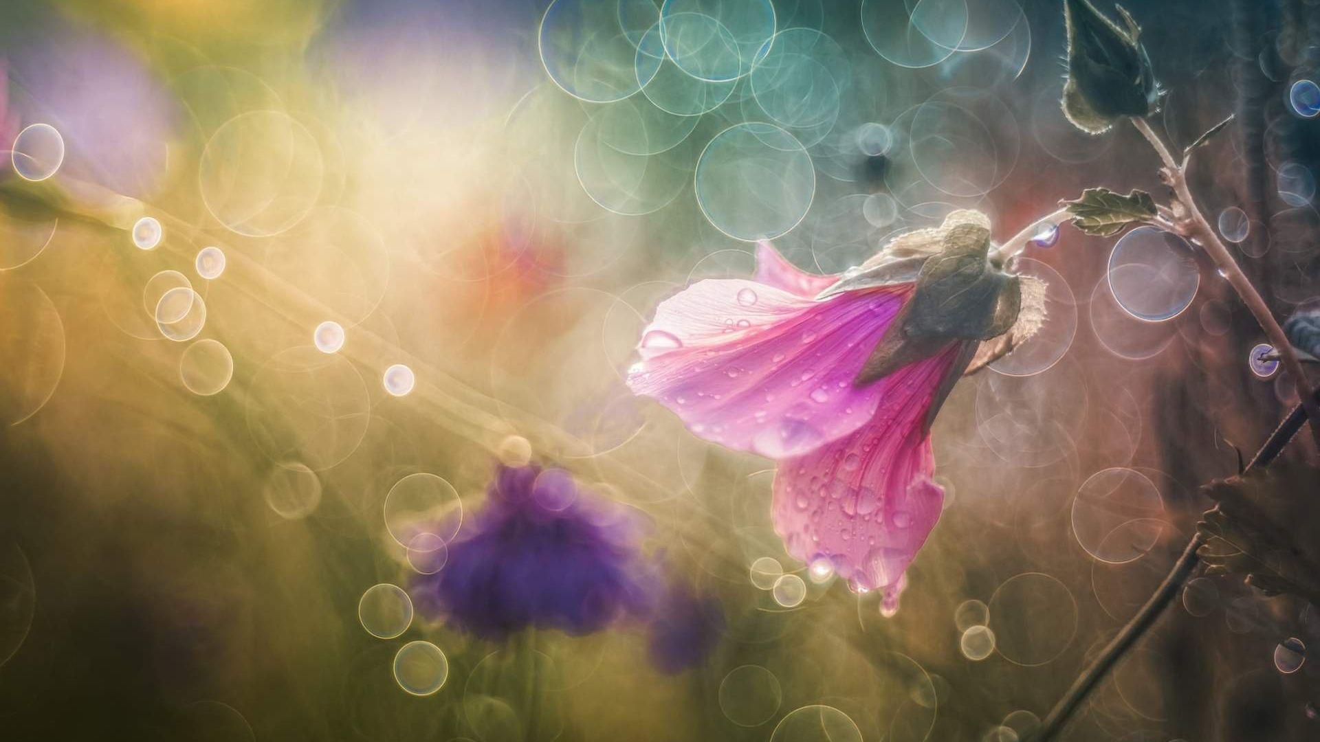 Desktop Wallpaper Pink Flower Glitter Background Hd Image Picture