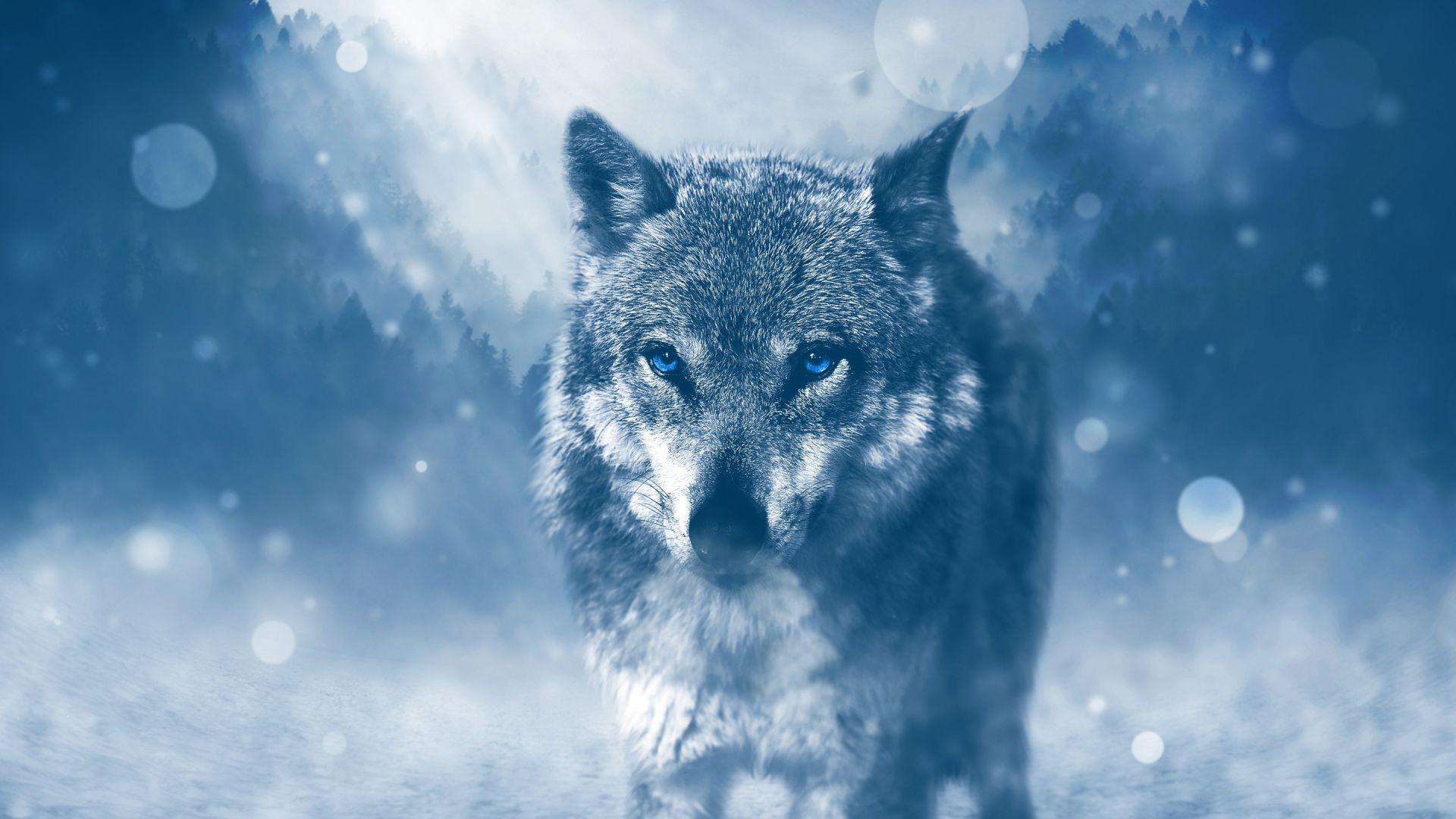 Wallpaper Wild wolf, animal