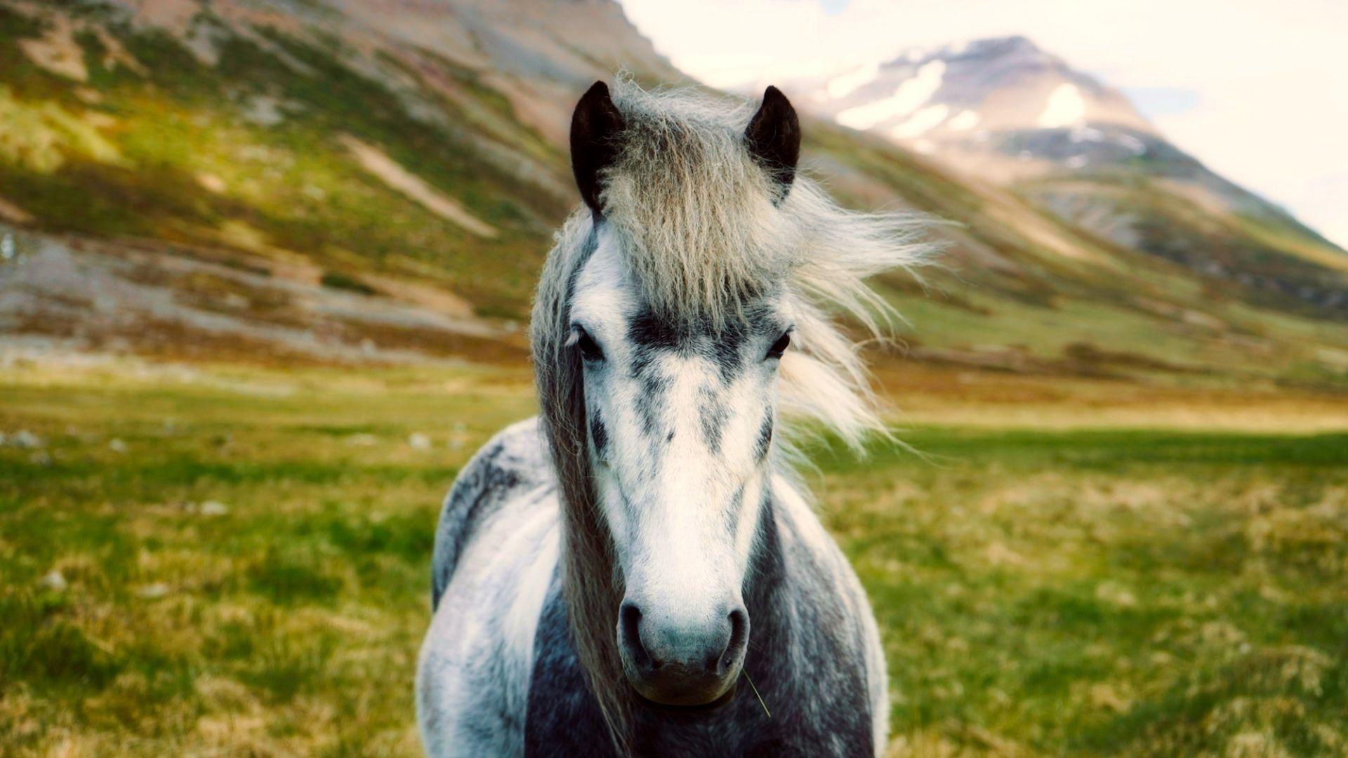 Wallpaper Iceland horse, landscape, animal