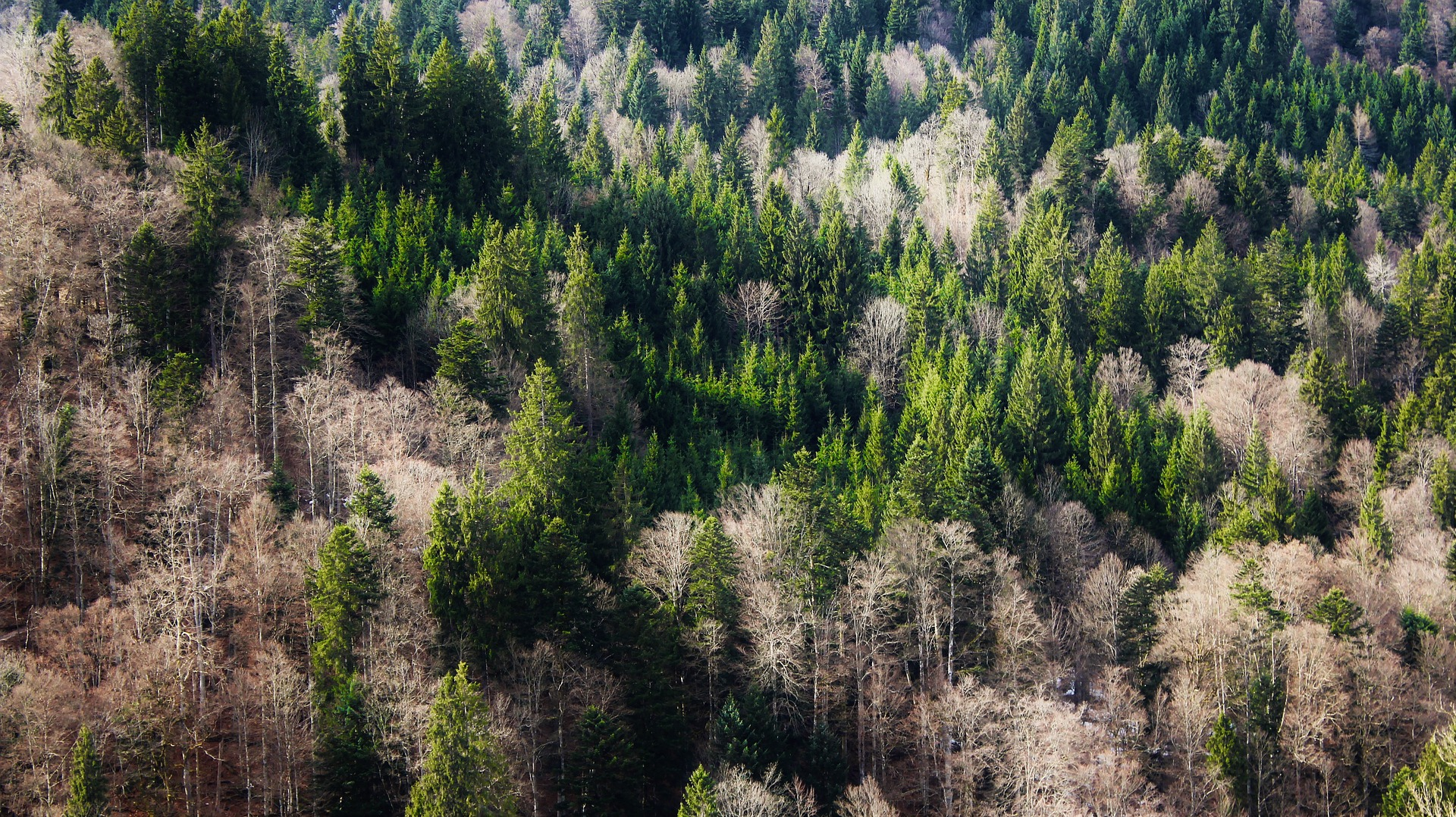 Wallpaper Forest, tree, nature, aerial view